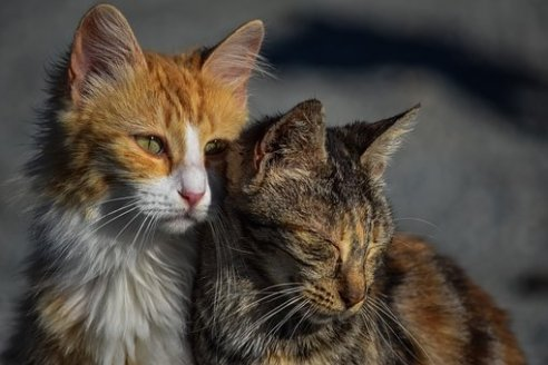 cats relationship partner mental health